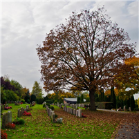 Der Friedhof in Bordesholm
